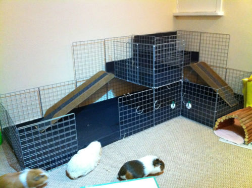 Correx Corrugated Plastic Sheets X 3 Black Pet Cage